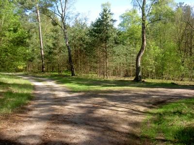 Wegkreuzung mit Flair. Das Waldgebiet zwischen Poratz und Redernswalde zeigt besonders viele Gesichter.