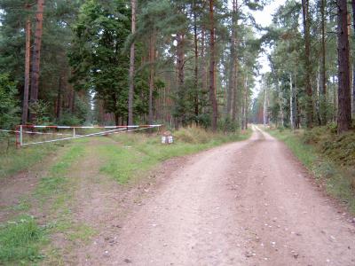 Weg zum Kleinen Glasowsee (rechts) oder zum Trämmersee (links)