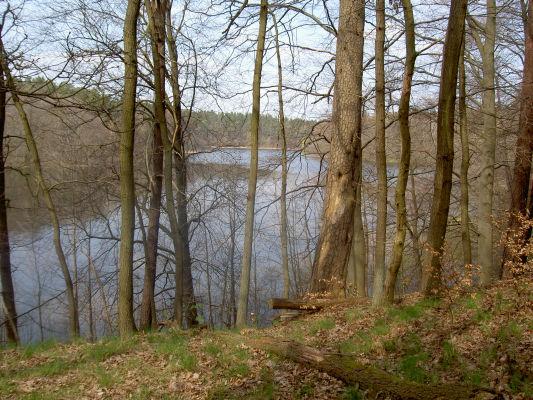 Blick vom ehemaligen Standort des Waldhofs Carinhall auf den Großdöllner See. - Blickrichtung Nord, zur auffälligen Knickstelle des hinteren Sees.