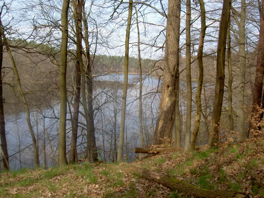 Zusatz-Foto (Aufl. 2). - Blick vom ehemaligen Standort des Waldhofs Carinhall auf den Großdöllner See (zum hinteren Ende).