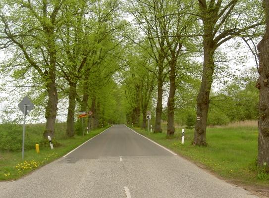 Schöne Allee von Hammer (bei Liebenwalde) nach Liebenthal (mit Wildpferdgehege, ca. 2 km vom Dorf entfernt).