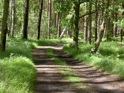 Herrlicher Waldweg, ungefähr auf halber Strecke zwischen Gut Sarnow und den früheren Jagdhaus von Erich Honecker, das sehr gut erhalten ist. Auf der Strecke kommt man auch zu den Pinnowseen.