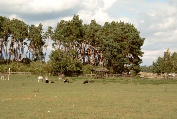 Wildpferdgehege Liebenthal, vorderer Bereich mit Kleintierzoo