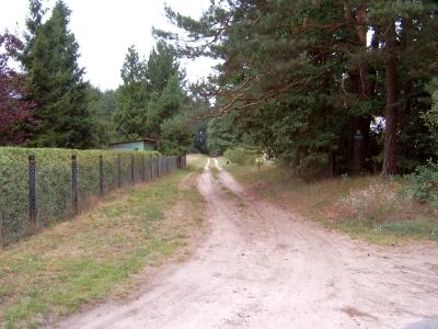 Offzieller Wanderweg vom Bahnhof Groß Schönebeck zum Wildpark Schorfheide - überwiegend gut beschildert und markiert. Foto zeigt einen sandigen Seitenweg. Radeln ist durchaus möglich, aber teils etwas erschwert.