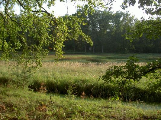 Die Michenwiesen - schöne Landschaft oberhalb von Michen. Ein Spaziergang lohnt sich, führt aber etwas bergauf.