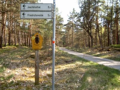 """Reizvolle Route auf Asphalt, für PKWs gesperrt: Die """"Alte Waldbahn"""". - Führt vom Forsthaus Wucker (nah bei Carinhall) in Richtung Michen / Werbellinsee."""