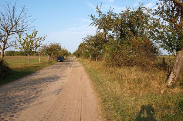 Pflasterstraße mit einigermaßen radelbarem Randstreifen (Ende des Groß Schönebecker Damms bei Joachimsthal). - Besonderheit:  alte und neue Apfelbäume mit Info-Schildern!