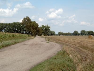 Feldweg als einsame Straße nach Kappe. - Radler können eine tolle Schorfheide-Rundtour absolvieren. Führt ab Groß Schönebeck über Schluft, Kappe und Vietmannsdorf im großen Bogen nach Michen (Werbellinsee) und auf auf festen Wegen zurück.