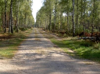 Kreuzdamm. - Hat Kopfsteinpflaster auf der ganzen Strecke zwischen L100 und Spring. Zum Radeln gar nicht geeignet. - Schneidet mitten im Wald den Groß Schönebecker Damm (offziell als Alte Joachimsthaler Str. bezeichnet).