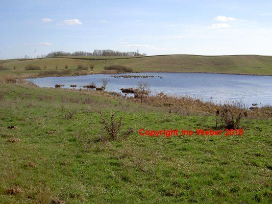 Der Bültenpfuhl. - Ein wunderschöner Teich vor eindrucksvoller Hügellandschaft.