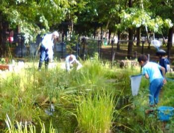 普段の活動は池の清掃や観察。ここ数年はなるべく草を刈らず、小さな生き物が住めるようにしています