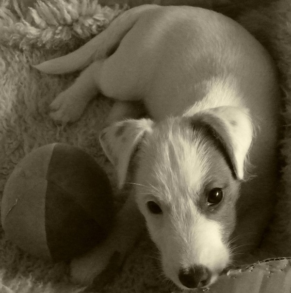Fritz mein Kleiner
