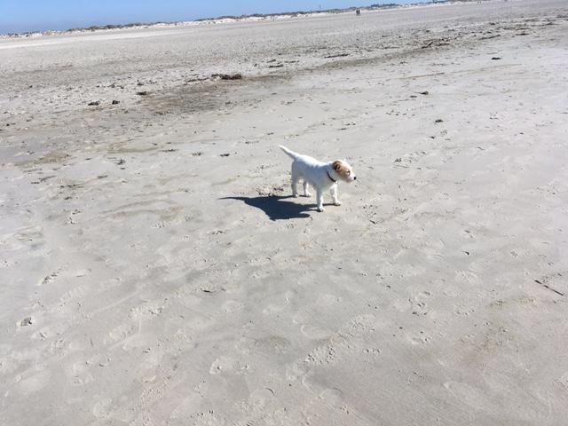 Debby am Strand von Sankt Peter Ording