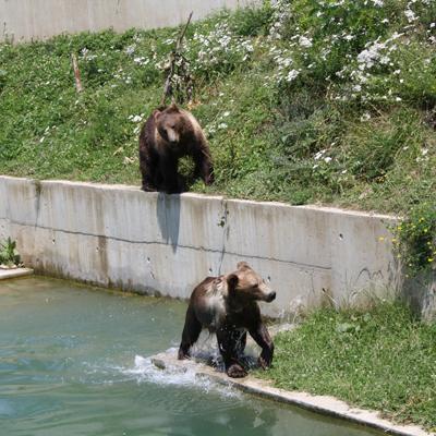 Berne - Bear Park
