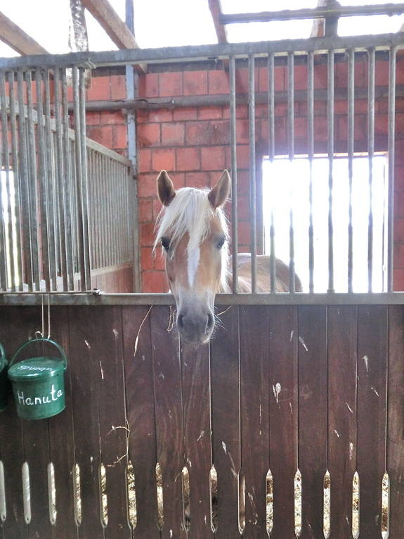 Pferdebox mit Ausblick auf die Stallgasse