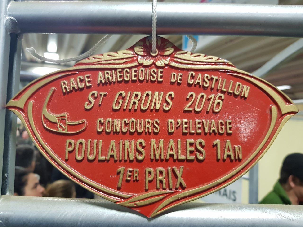 """Fusain de Bareille """"champion suprême de la race"""" du Cheval Castillonnais. Discussion avec Mme Nicole Flouirac de Villeneuve-de-Rivière autour de la problématique du développement de la race."""