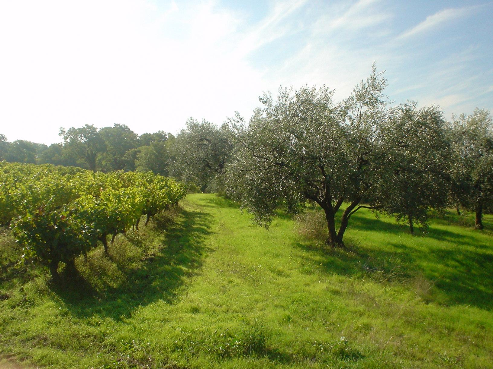 Domaine du ch ne vert site de domaineduchenevert - Maladie du chene vert arbre ...
