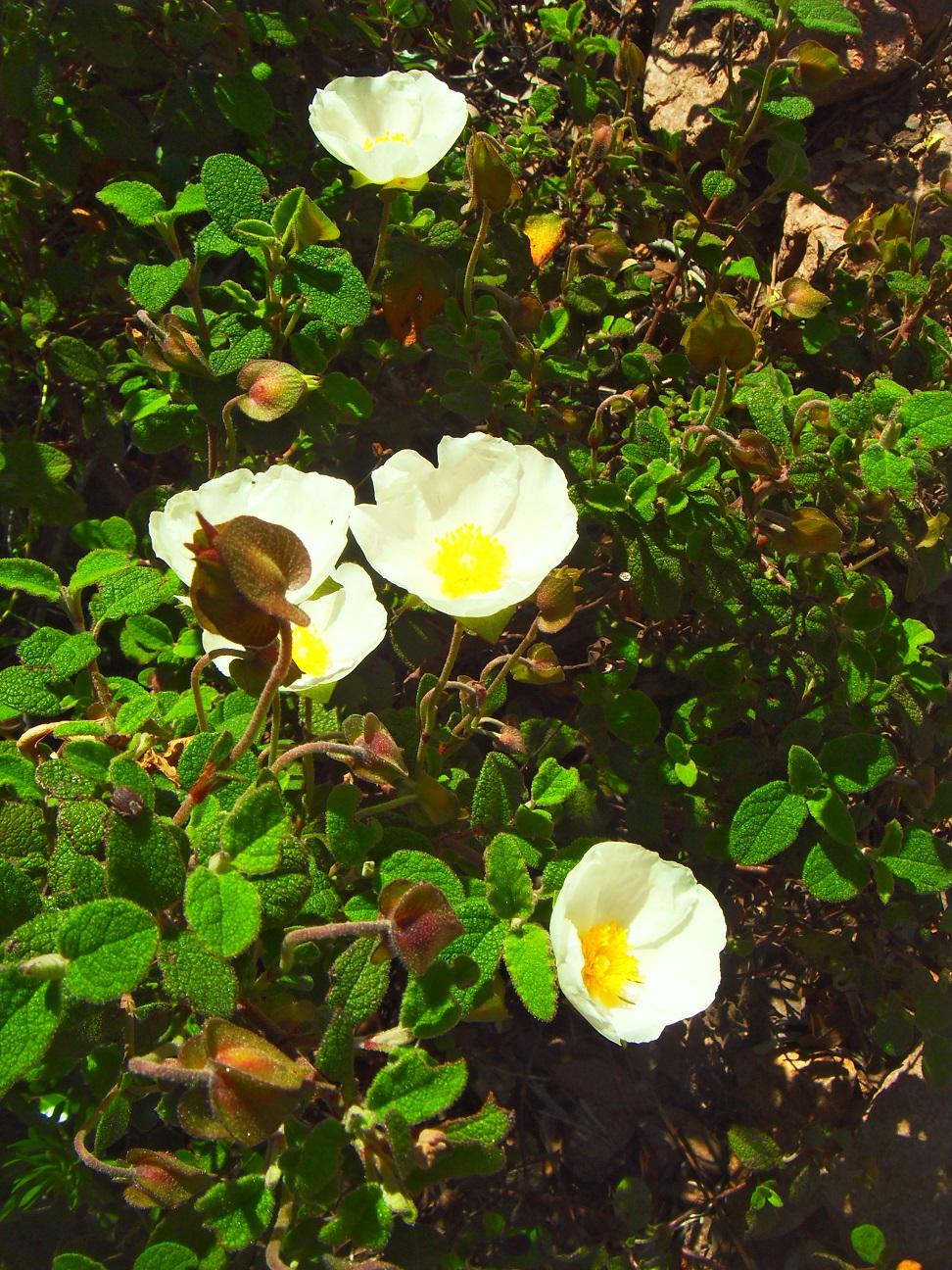 45-Petit clin d'oeil à la section Loisir & Botanique
