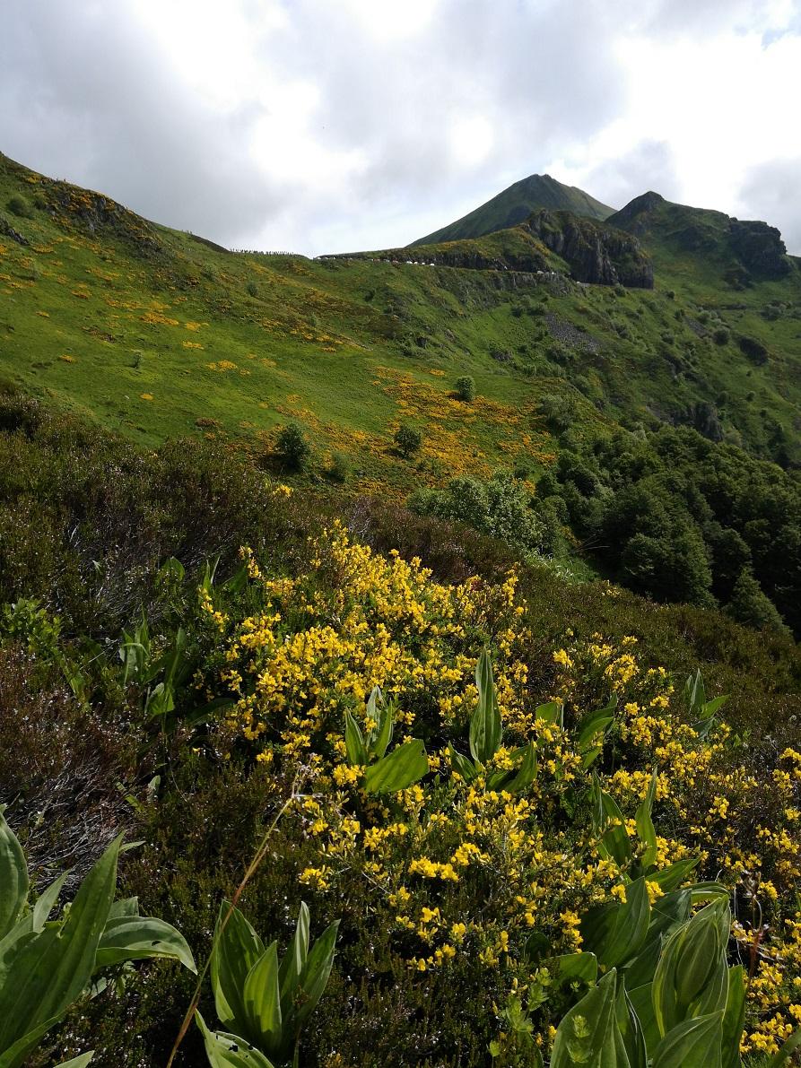 23-Avis aux botanistes 'en herbe'..