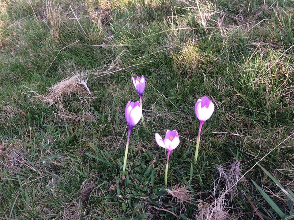 15-Des jolies fleurs , on en a vues toute la journée