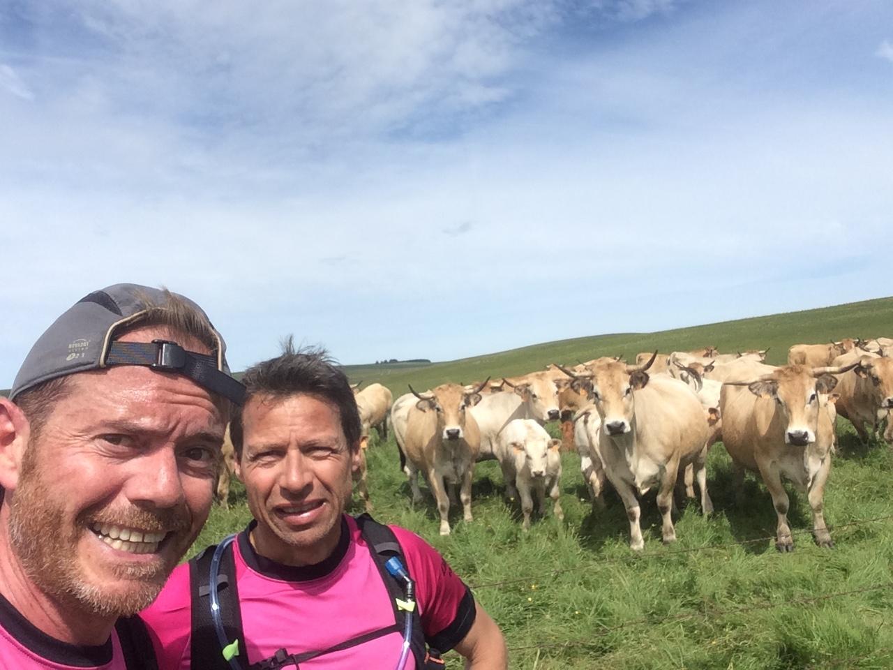 7-Des Taureaux & des vaches, Meuuuuuuh