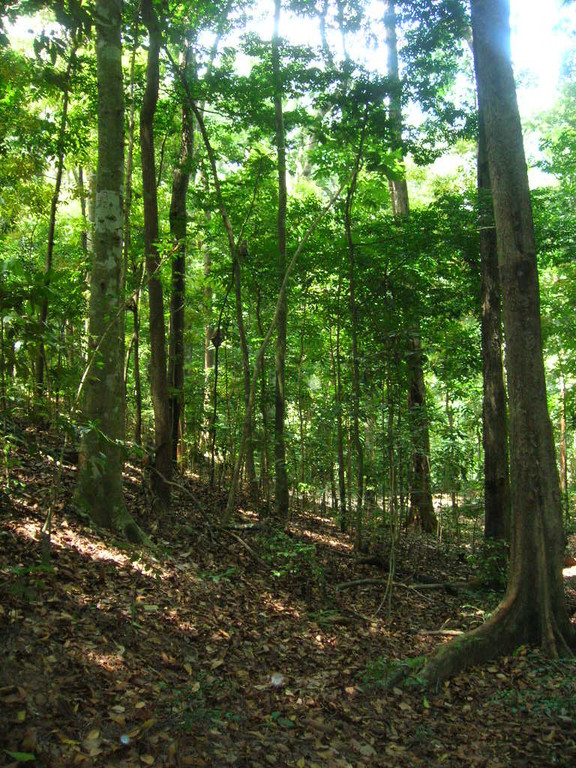 Regenwald im Uda Waalawe Nationalpark