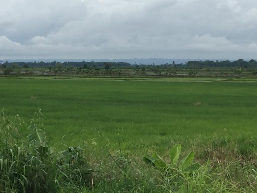 Reisanbau im Norden von DR