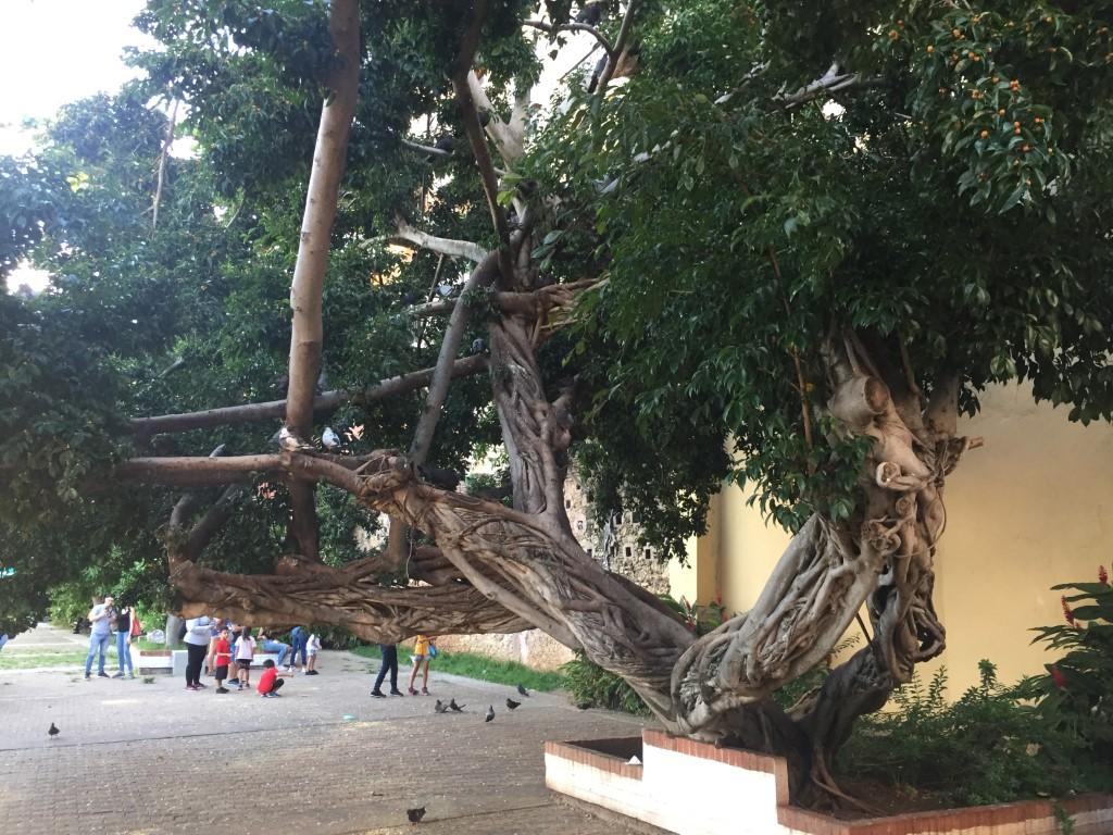 Puerto Rico, San Juan, Altstadt, Parque las Palomas