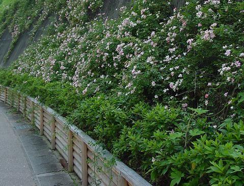 花の都ぎふ観光地アクセス花かざり 2003年