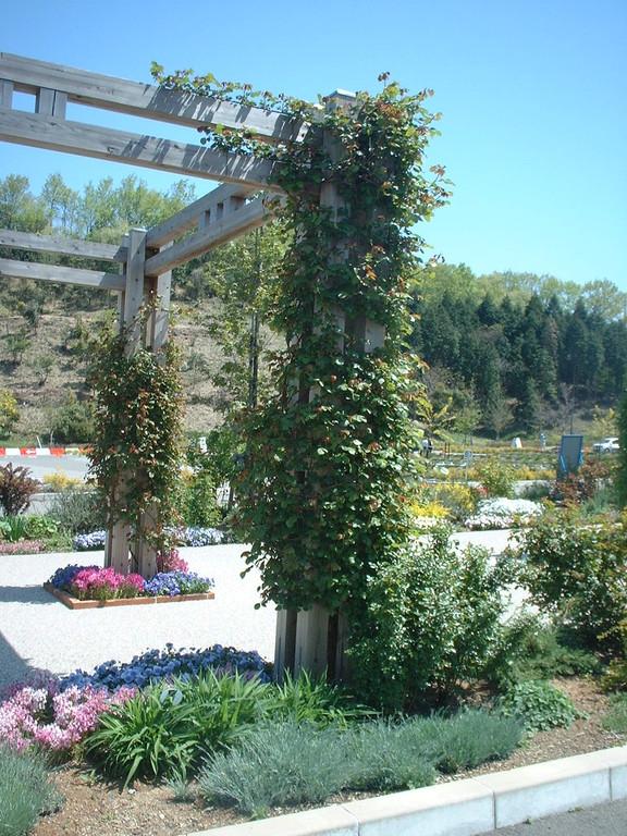 花フェスタ記念公園 2003年