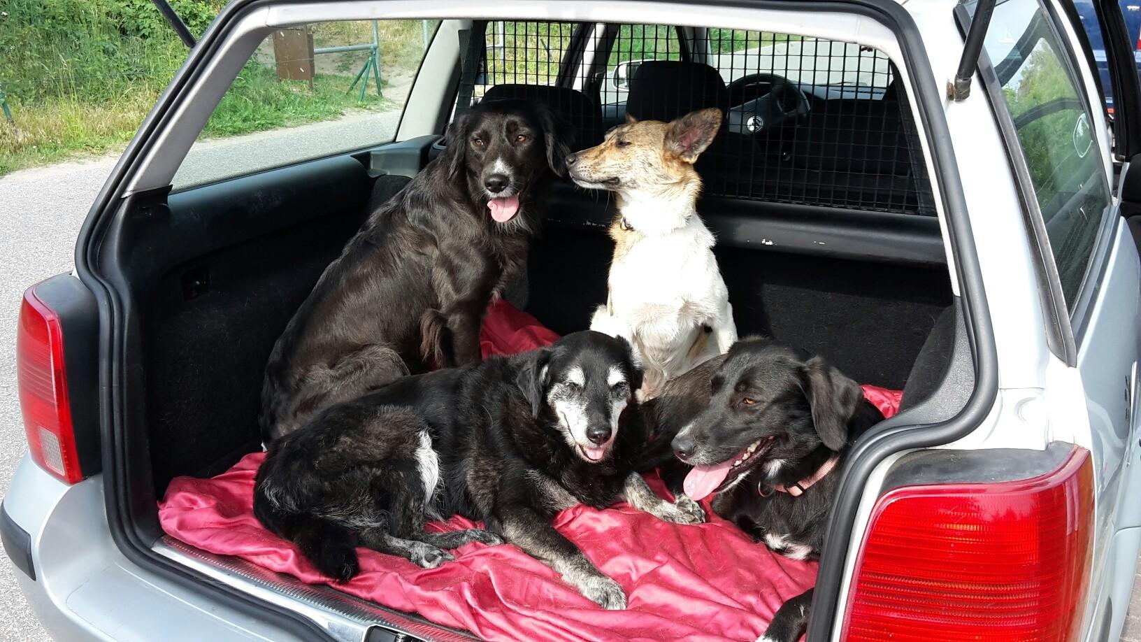 hundetraining seelenhund ebner problemhundberaterin. Black Bedroom Furniture Sets. Home Design Ideas