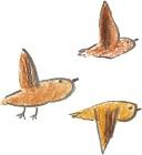 飛ぶ鳥画像