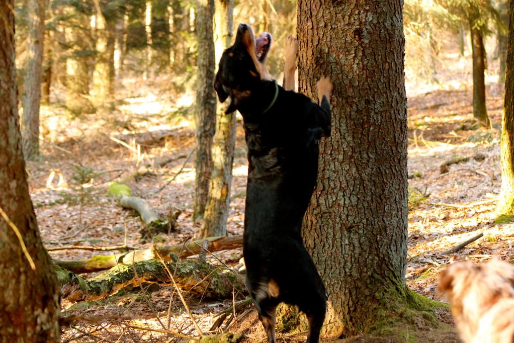der Baum hat es Ayka angetan