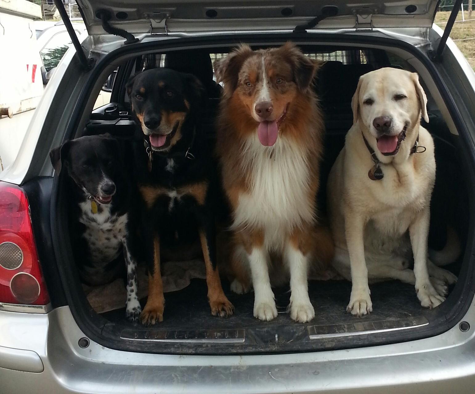 Wartezeit im Auto