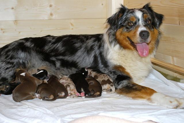 Mama Joy und die Babys (4 R/4H)