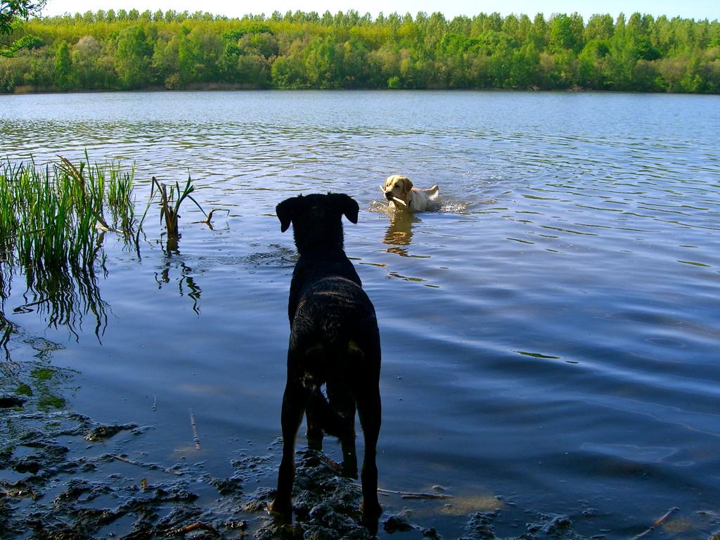 Ayka & Oskar an ihrem geliebten Rhein