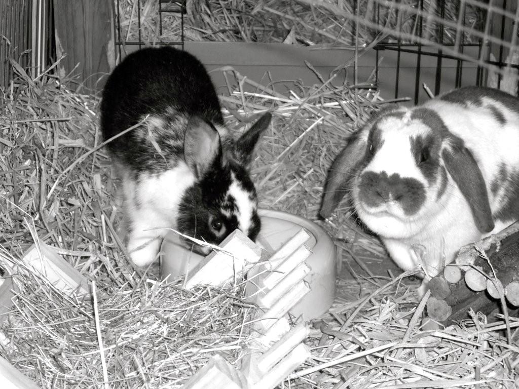die Hoppels Paul mit seiner verstorbenen Freundin Frieda