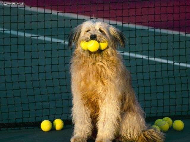 Tennis, anyone?