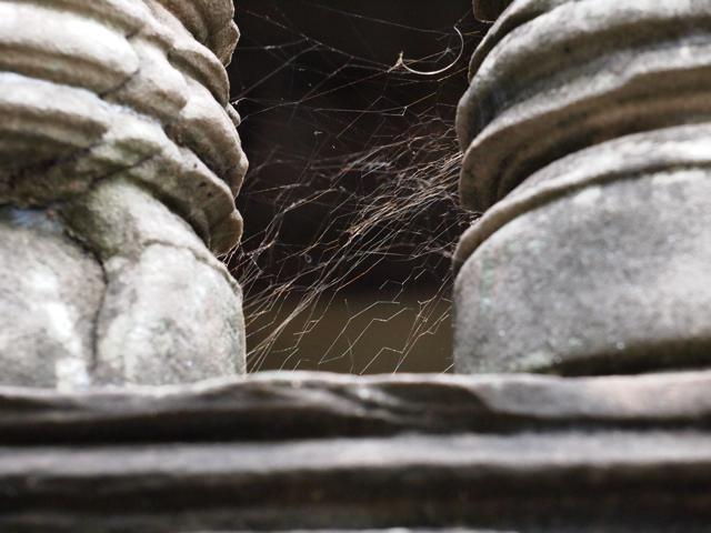アンコールワット 蜘蛛の糸