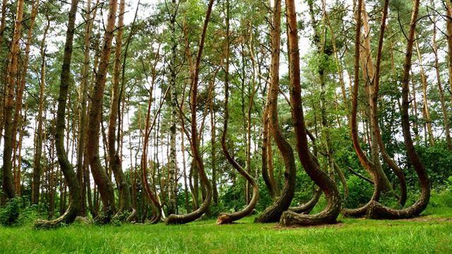 不自然に歪んだ森