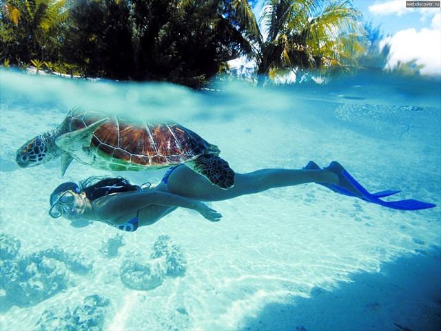 ボラボラ島で泳ぐウミガメと女性