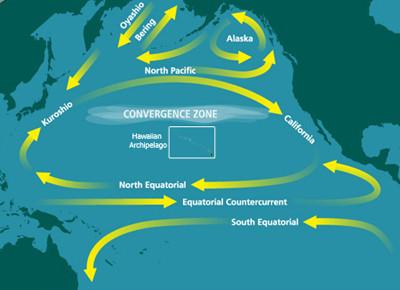 北太平洋循環