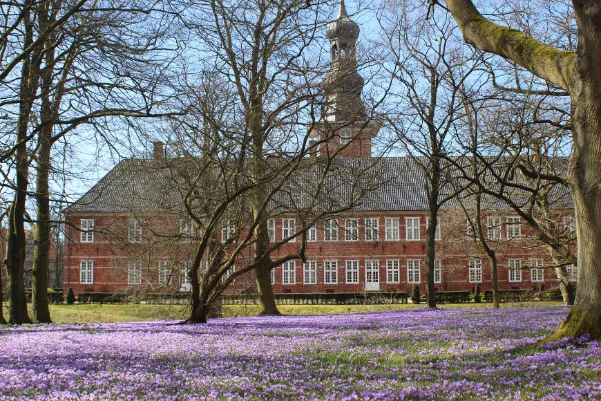Krokusblüten vor dem Schloss in Husum
