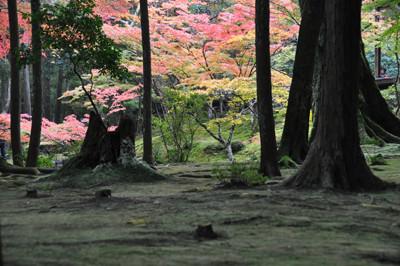 西芳寺(苔寺)庭園