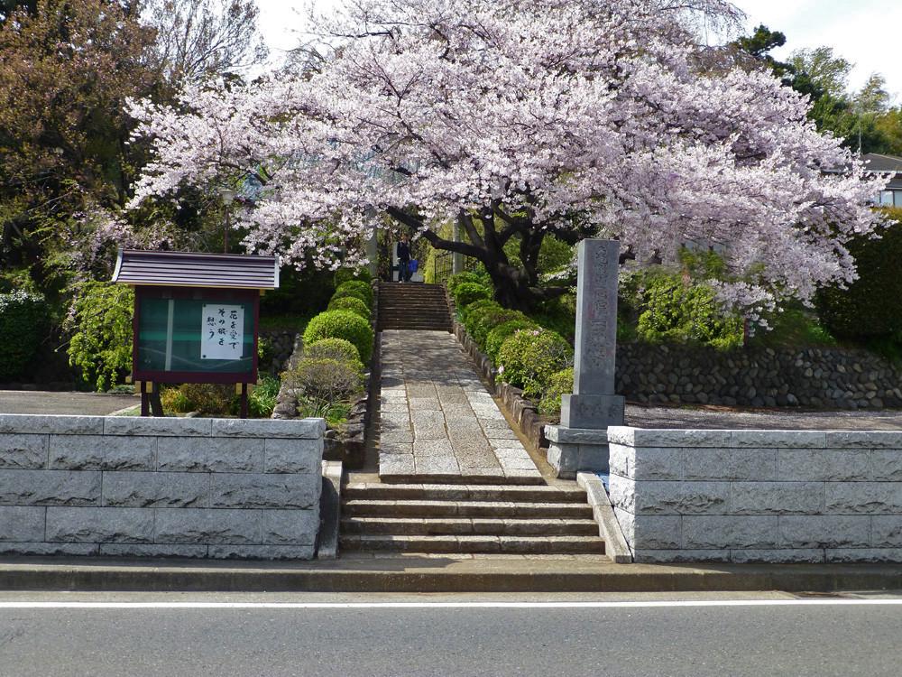 西林寺の桜(4月6日撮影)