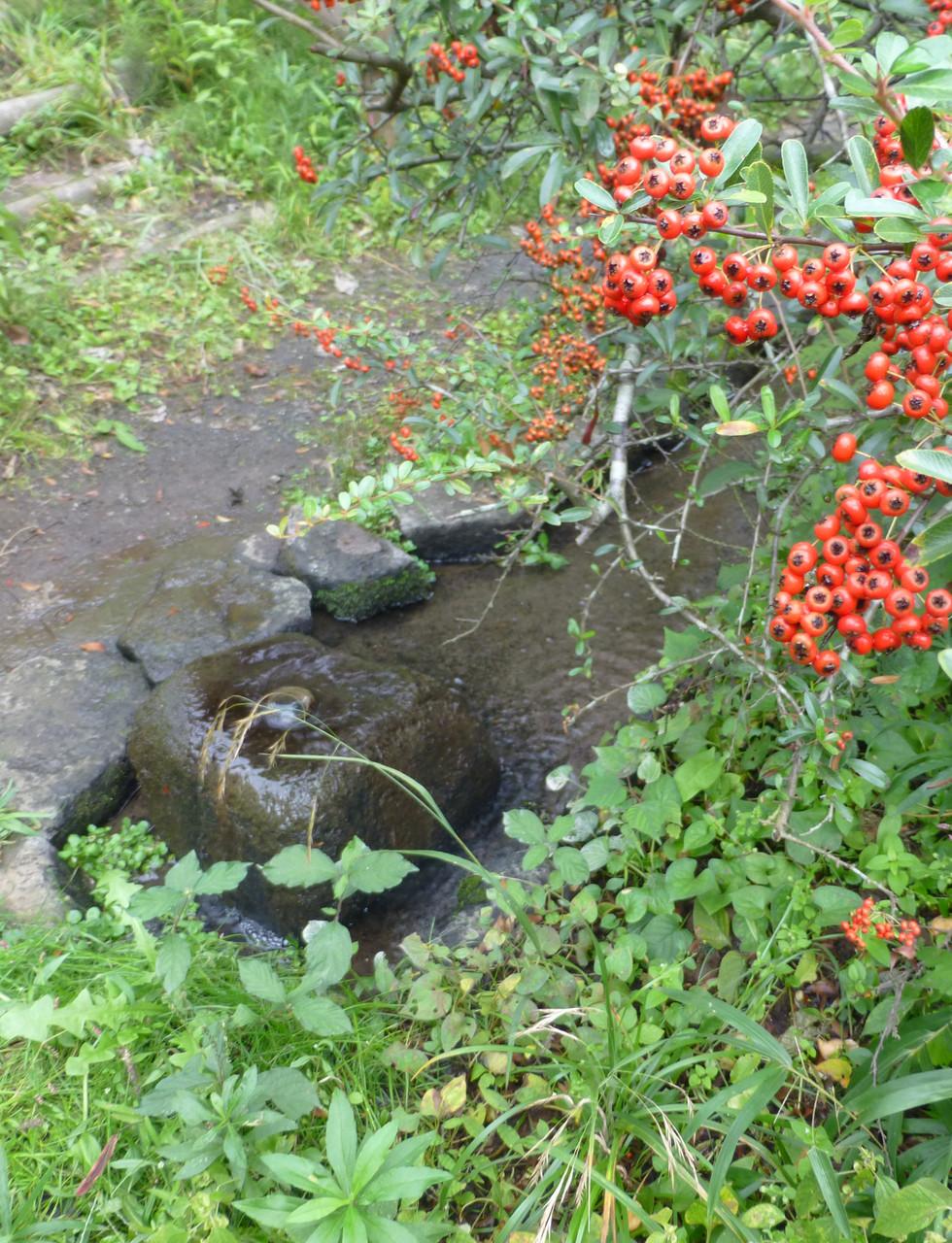 帷子川の源泉