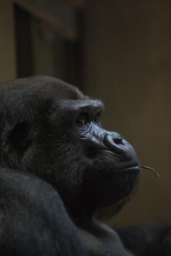 """Ausstellungs # 25 Format 60x40cm Titel: """"Im Zoo leben"""""""