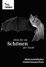 Feldermausnacht - Bat night!