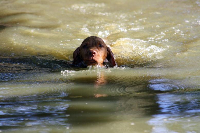 Carlos schwimmt exzellent