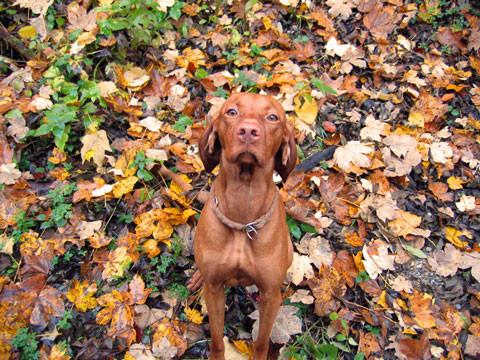 beste Tarnung im Herbst
